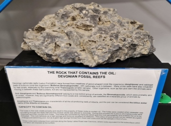 Coral Reef fossils help to hold oil reserves