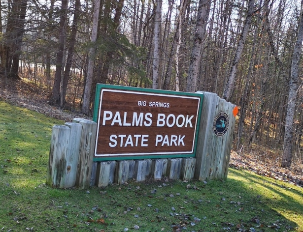 Palms Book SP