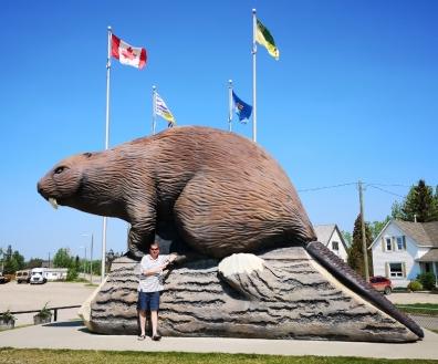 Beaverlodge Beaver