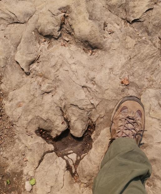 Ornithopod Tracks
