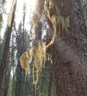 Quality Falls trail lichen
