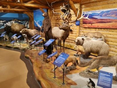 Yukon wildlife