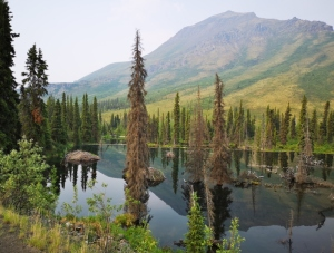 Beaver Pond with 2 lodges