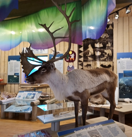 The only Caribou we saw;-)