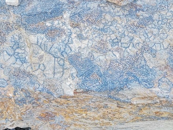 Cool rocks - fossilized plants?