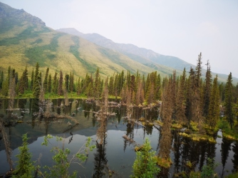 Reflections on the Beaver Pond