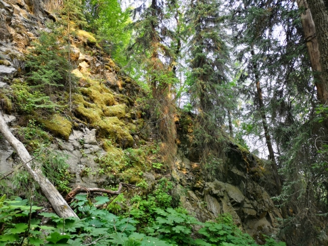 Along trail to Pioneer Falls