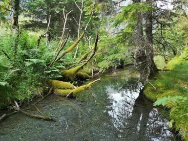 Tranquil creek