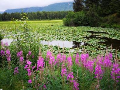 Wayside lily pond