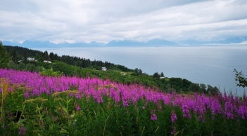 View before descending the hill to Homer