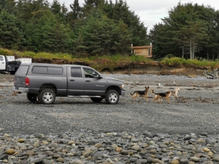 Alaskan way to take your dogs for a walk on the beach, or maybe they are training for the Iditarod.