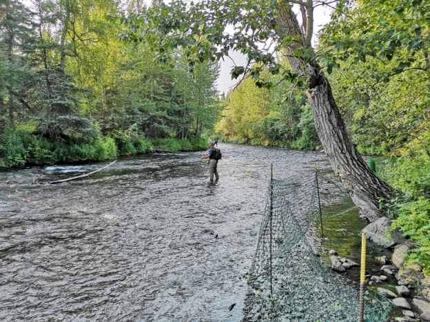 Flyfishing on Russian River