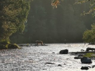 Our first Grizzly sighting - note the fishermen standing in the water