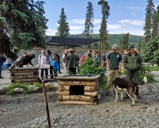 Sled Dog kennel area