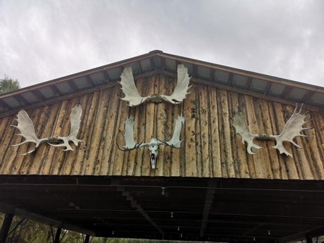 Antler display over airplane hangar