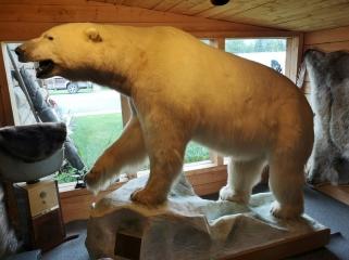 World Record Polar Beer