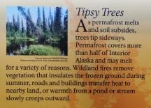 Tipsy Trees