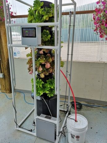 Lettuce in hydroponic tower