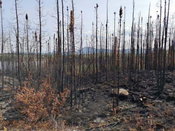 Recent fire around Snag Campground