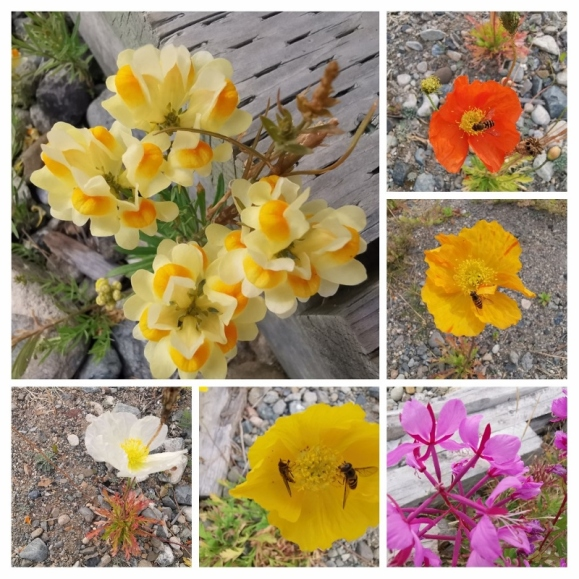 Flowers growing on our campsite