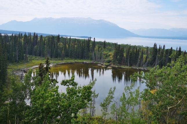 Three Beaver Lodges on the pond