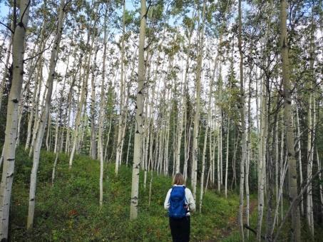 Trail through Aspen forest