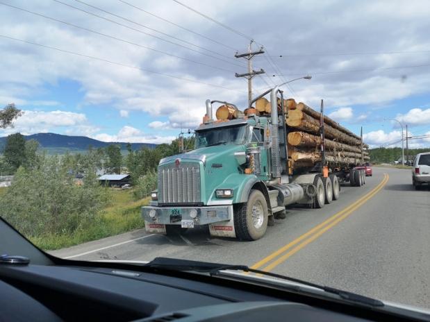 Many logging trucks