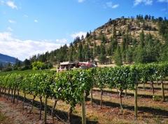 Thorhaven Estates Winery