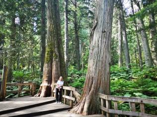 Giant Cedars Boardwalk