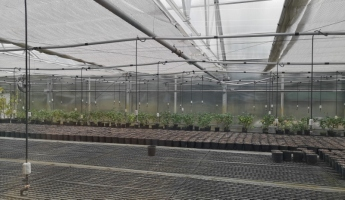 Greenhouse to produce new plants from cuttings