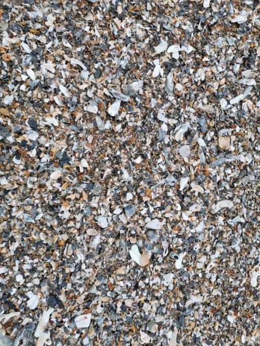 Edisto Beach shells
