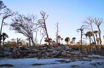 Trees down from Hurricane Mathew