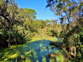 Pond along the trails