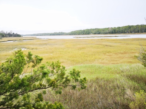 View from the Observation Tower of the Salt Marsh and the Intracoastal Waterway
