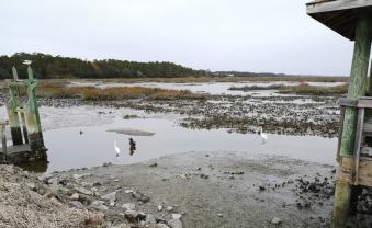 Huntington marsh with egrets