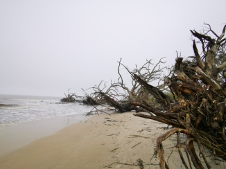 Driftwood Beach at high tide