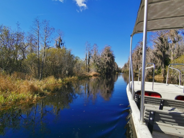 Guided Boat tour up Suwannee Canal