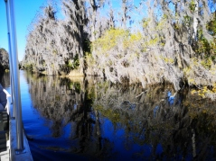 Spanish Moss on the Cypress trees