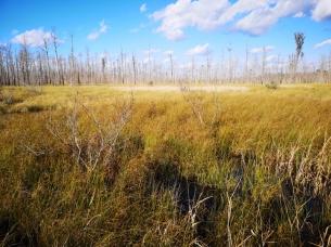 Chesser Prairie