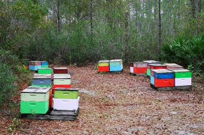 Active bee hives for local honey