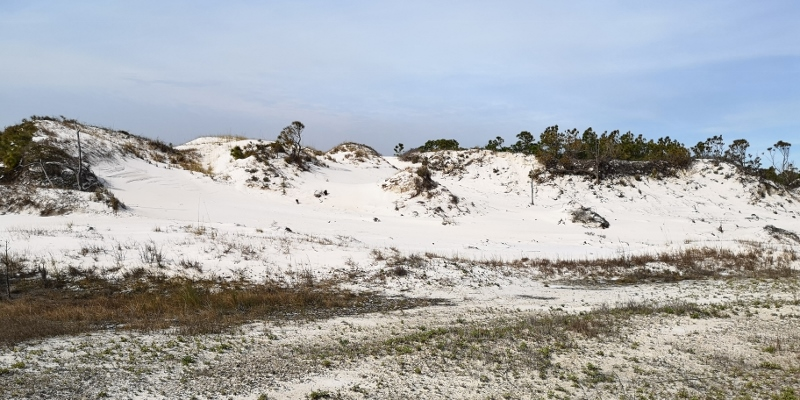 Dunes that absorb storm surge