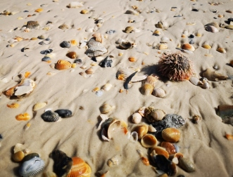 Seashells and Sea Urchin