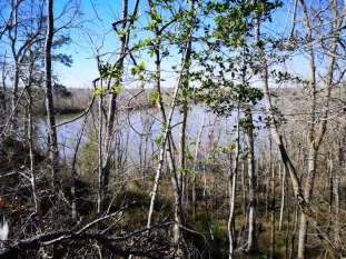 View of Apalachicola River from primitive campsite #1
