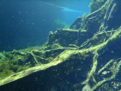 Tree roots underwater