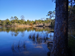 Rocky Bayou with tall Slash Pines along the shore