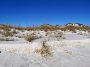 Dunes that protect the park from storms off the Gulf