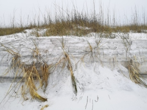 Dunes along the beach