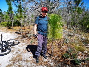 Joel with baby Longleaf Pine