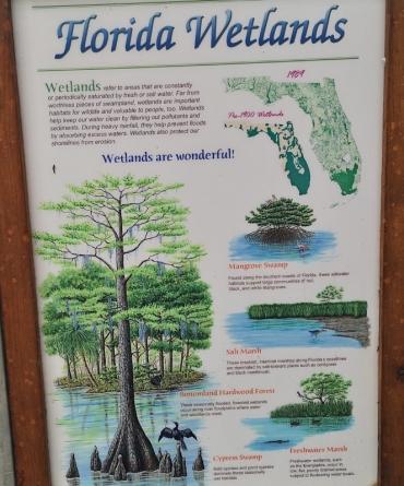 Big decline in Florida Wetlands over the century