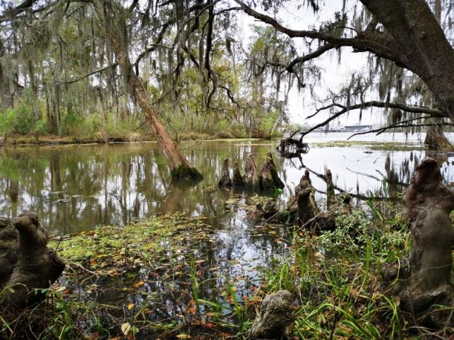 Along the swamp boardwalk